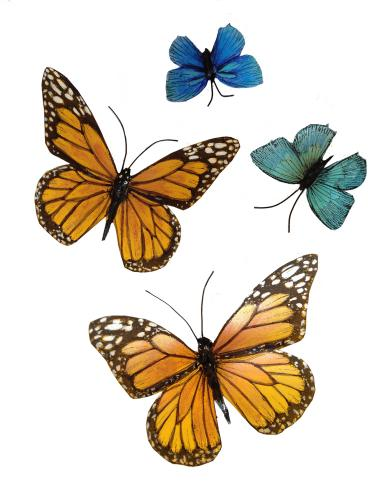 azure-butterfly-1
