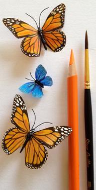 butterflyside1